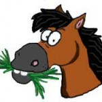 Please help feed our MTRA horses!